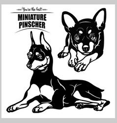 Miniature pinscher - set isolated vector
