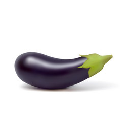 photo-realistic fresh aubergine on a white vector image