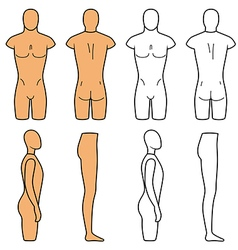 Male mannequin outlined torso vector image