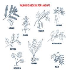 Ayurvedic herbs for long life natural botanical vector