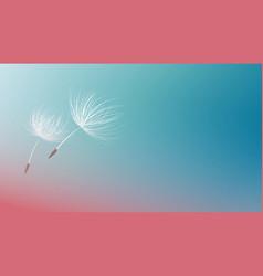 dandelion seeds flying on blue background vector image
