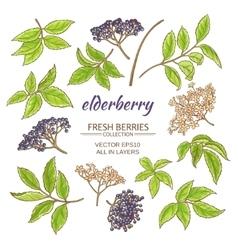 Elderberry set vector