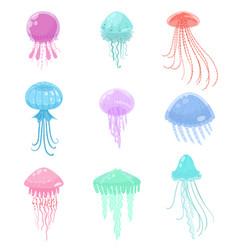 set colorful sea and ocean jellyfish marine vector image