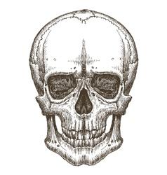skull logo design template death disease vector image vector image