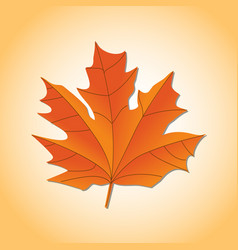 autumn leaf autumn maple leaf isolated on a white vector image