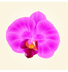 beautiful purple orchid flower closeup isolated vector image