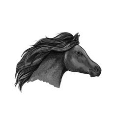 Black graceful horse portrait vector image