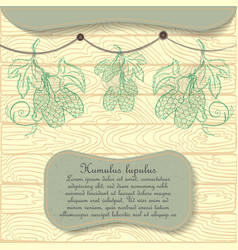 Hand drawn hop plant hung for drying vector