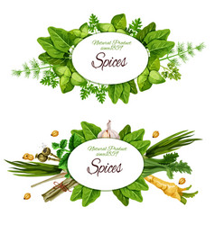 Natural herbal spices and herbs vector
