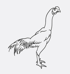 rooster sketch vector image vector image