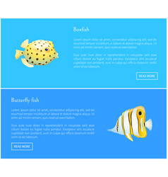 Butterfly fish and boxfish set vector