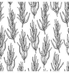 Rosemary drawing seamless pattern Isolated vector