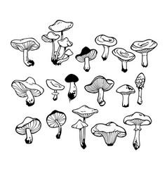 Set of drawn samples of various mushrooms vector