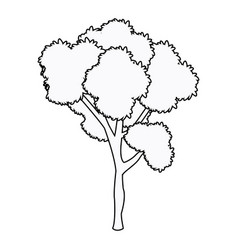 tree plant leafy forest wood outline vector image