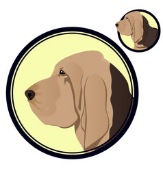 Bloodhound head in circle vector