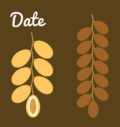 Dates fruit vector