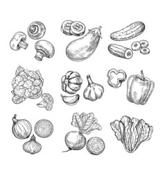 hand drawn vegetables garden cauliflower pepper vector image