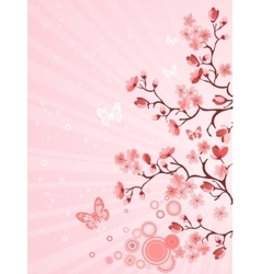 Japanese cherry blossom vector image
