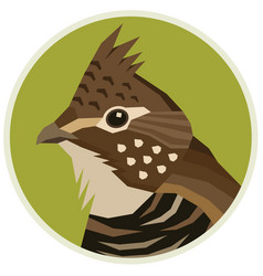 Ruffed grouse birds collection vector