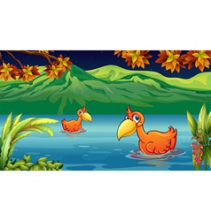 Two ducks swimming in the river vector