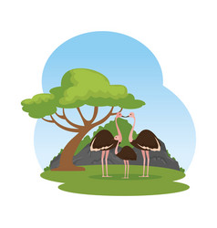 wild ostrich family birds in the landscape vector image