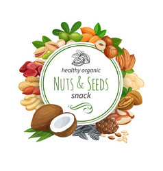 Banner template with nuts and seeds vector