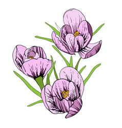 first flowers with crocus and vector image