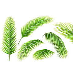Palm tree leaves set vector