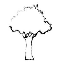 natural tree foliage branch trunk sketch vector image
