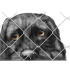 adopt animal vector image