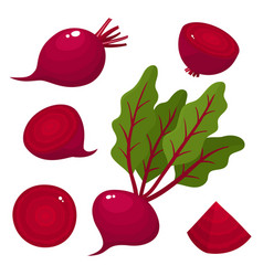 bright set of fresh beets isolated on white vector image