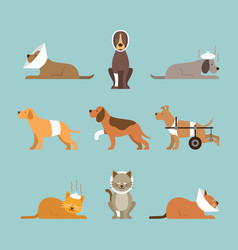 cats and dogs get sick vector image