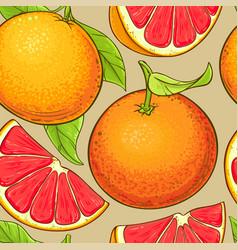 grapefruit fruits pattern vector image