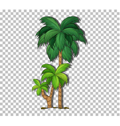 palm tree on transparent background vector image