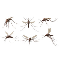 realistic mosquito blood sucking insects peddler vector image