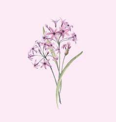 Watercolor allium flower vector