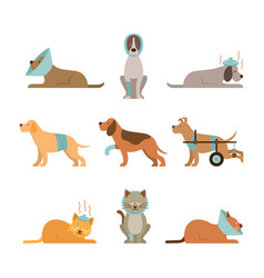 Cats and dogs get sick vector
