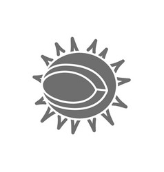 chestnut grey icon isolated on white background vector image
