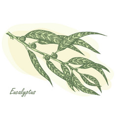eucalyptus leaves vector image