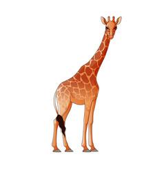 realistic giraffe isolated vector image