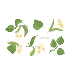 Bundle of elegant detailed botanical drawings vector