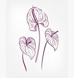 Engraved design elements sketch flower decorative vector
