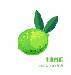 Fresh lime isolated on white background vector