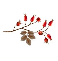Rosehip Berries vector