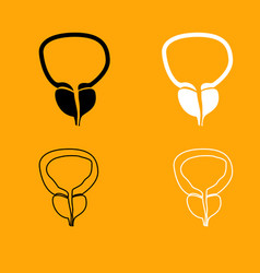 the prostate gland and bladder set icon vector image