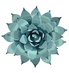 Top view of a blue agave plant vector