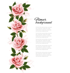 Flower background with beauty pink roses vector image
