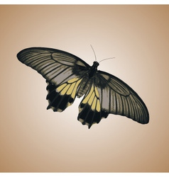 one isolated colorful simple butterfly eps10 vector image vector image