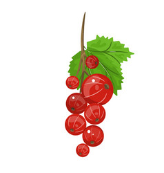 red currant realistic of vector image vector image