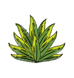 Beautiful leaf of the exotic plants in the forest vector